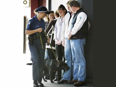 Sniffing dog lineup